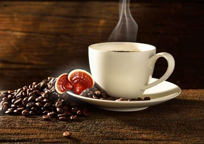 قهوة الجانوديرما
